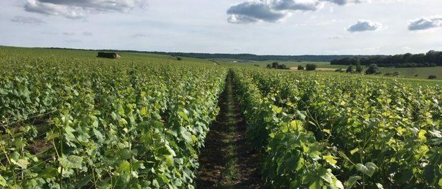 francois-Seconde_vigne