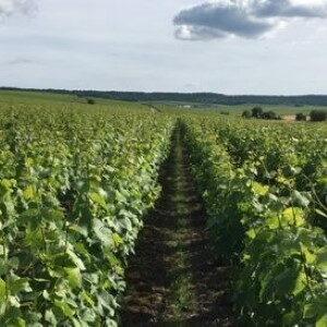 vigneron champagne francois-seconde